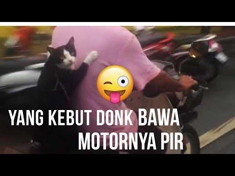 kucing-kebut-kebutan-naik-motor