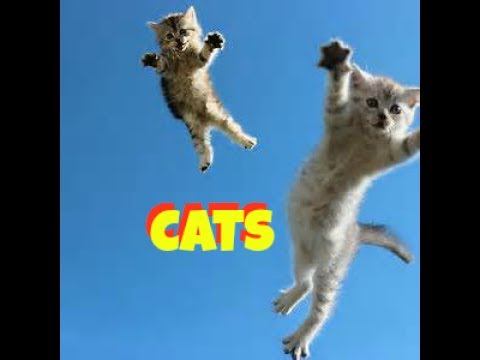 CATS JUMPING - HOW HIGH AND FAR CAN CATS JUMP?