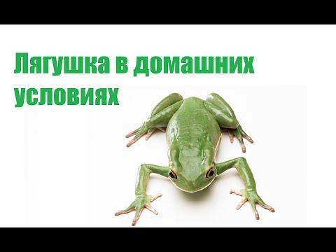 Вопрос: Чем интересна лягушка-пиноккио Какие у нее особенности?