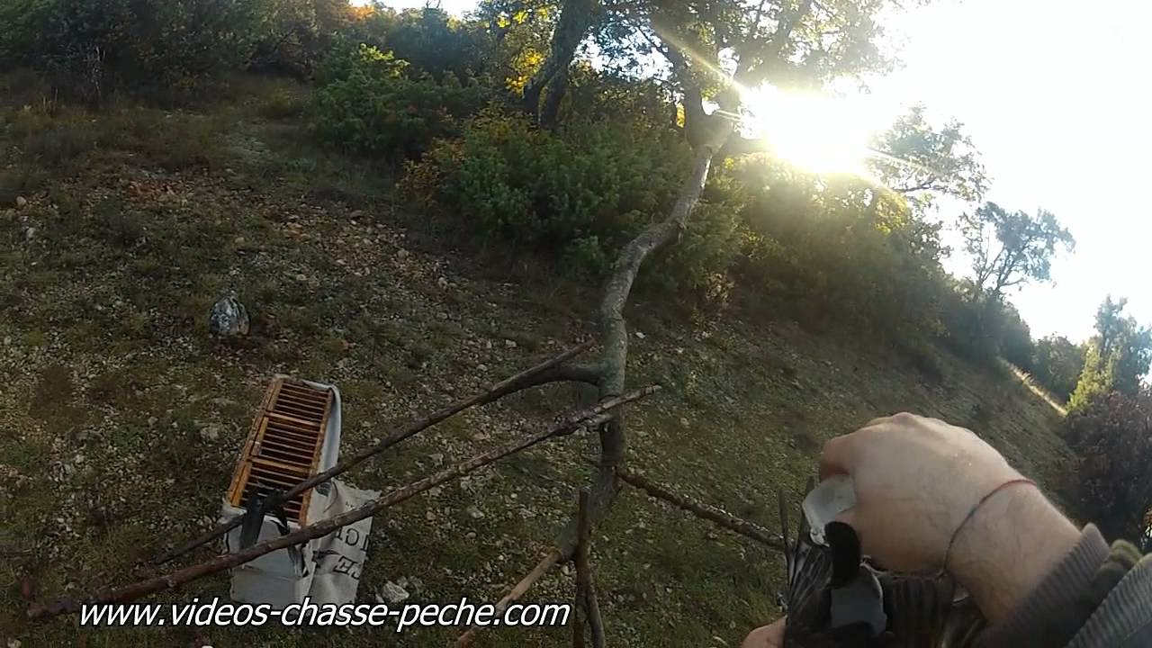 Grives litornes chasse la glu gopro hd 2 youtube - Fabrication glue pour chasse ...