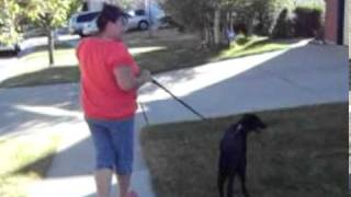 How To Train Your Dog Not To Pull:  Miracle Leash:  No Pull Leash For Dogs!