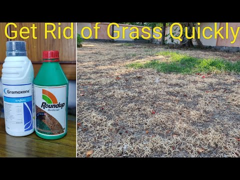 [HINDI] Get Rid of Grass Without Cutting and Stop Grass Growing Again.