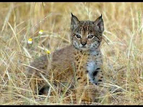 C mo ba ar a un gato agresivo sin que nos saque los ojos - Banar gatos ...