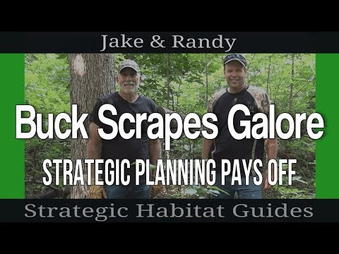 100 Scrapes in Only 7 Acres - Why Mature Bucks Love Jake's D