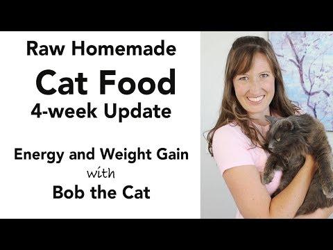 Homemade Cat Food Update (kidney Disease Diet - Low Phosphorus)