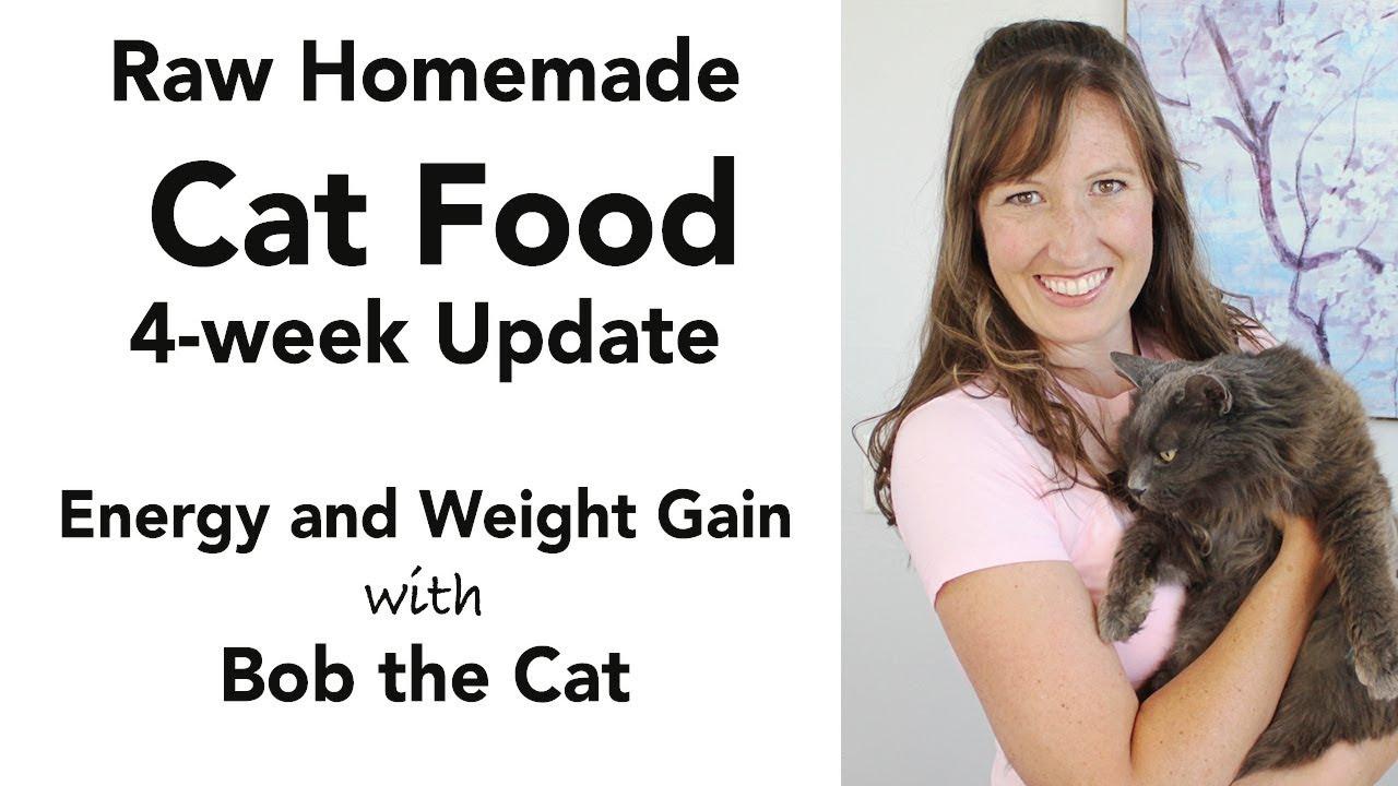 Homemade Cat Food Update (kidney