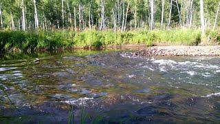 Звуки природы. ASMR Nature Sounds. Шум реки. Релакс. Природа Сибири.