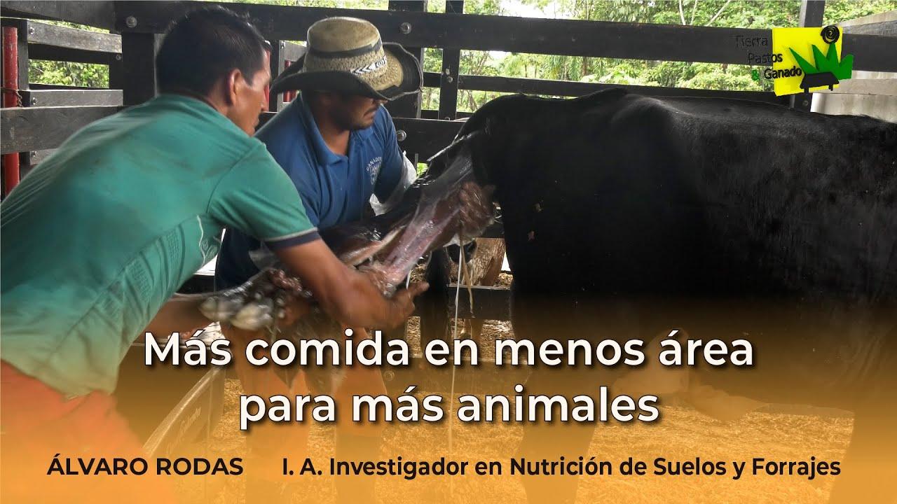 Más comida en menos área para más animales | Tierra Pastos y Ganado