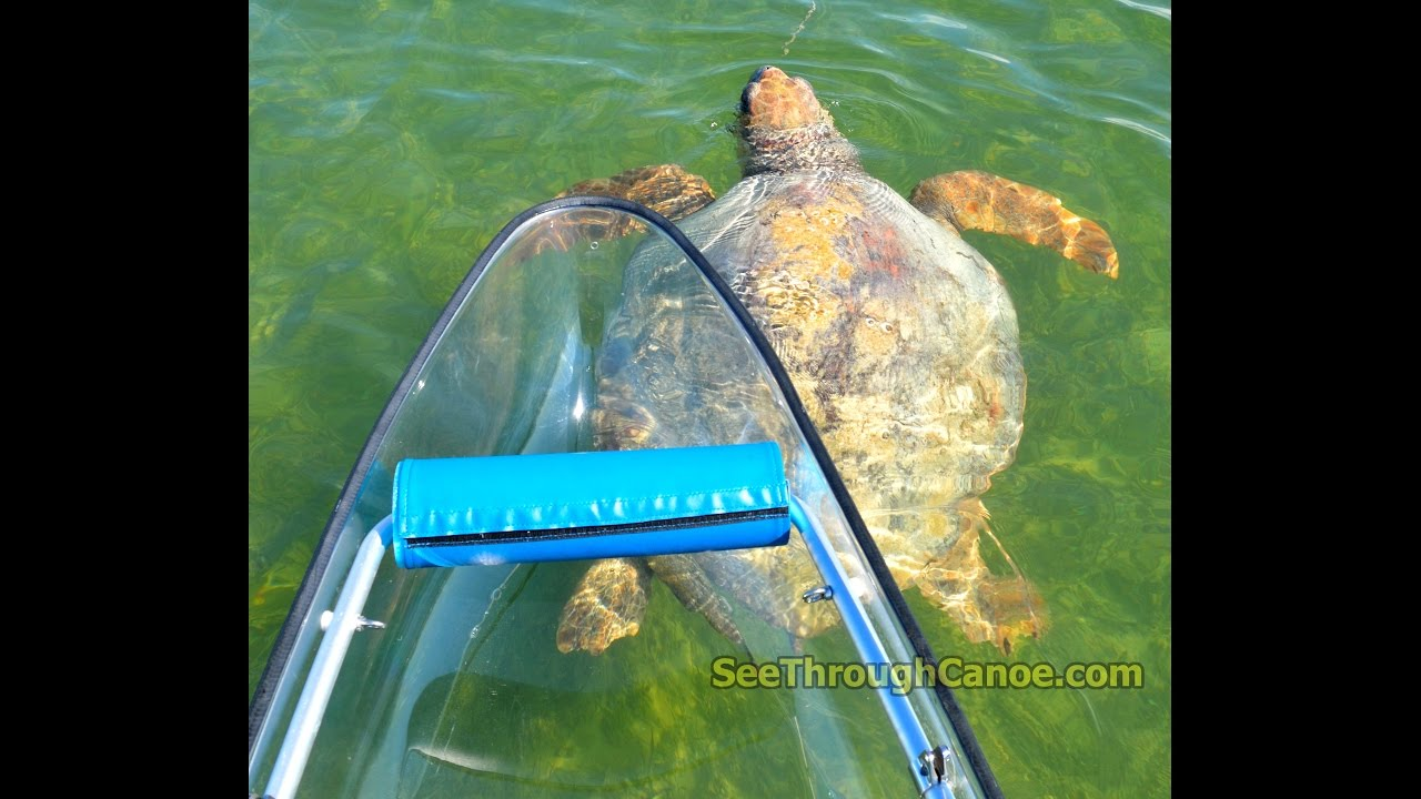 Transparent Canoe Kayak Kayaking The Crystal Clear Waters Of The Florida Keys In A See