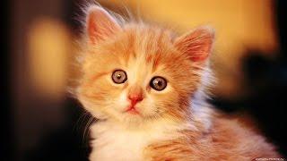 Прикольные коты -  лучшие демотиваторы!