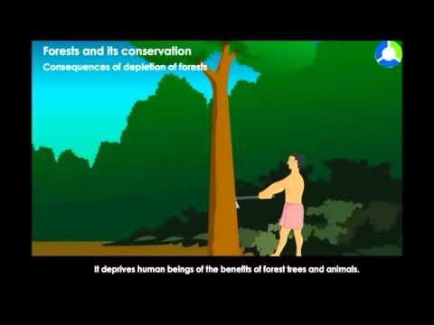 Forests and its conservation