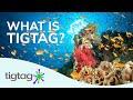 Tigtag & Tigtag Junior: Amazing Online Resources for Primary School Science