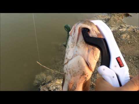 Texas Rig ... ปลาช่อนทไวไลท์