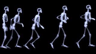 Los Huesos / Cancion V.O