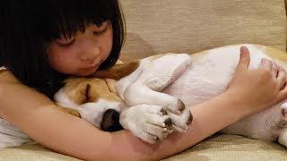 Beagle #ビーグル #うぃるさん 2人共幸せそう… 結果私も幸せな気分に...