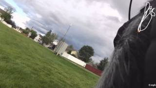 Garmin Dog Harness And Virb Camera - Playing Fetch