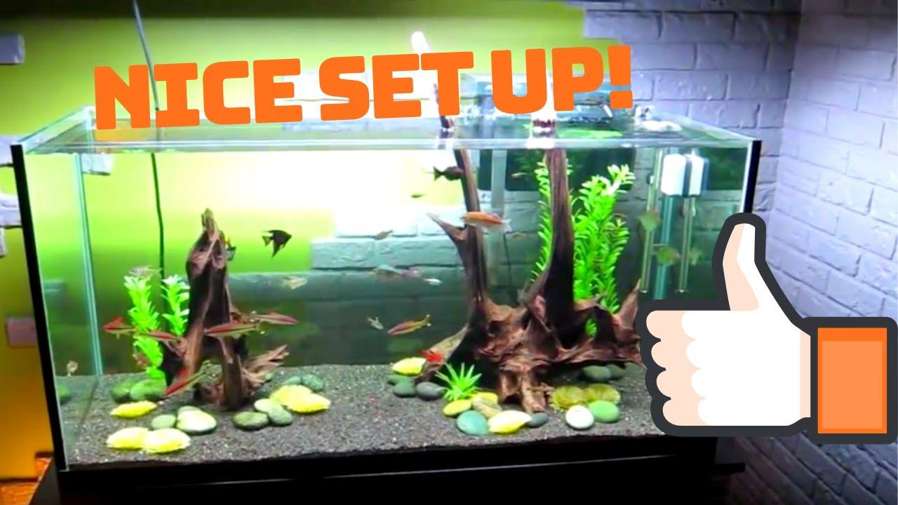 Freshwater fish tank youtube - 90 Gallon Freshwater Tank