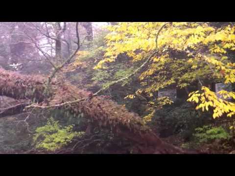 The Epiphytic Plants of Kikuchi Gorge, Kumamoto Prefecture, Kyushu, Japan
