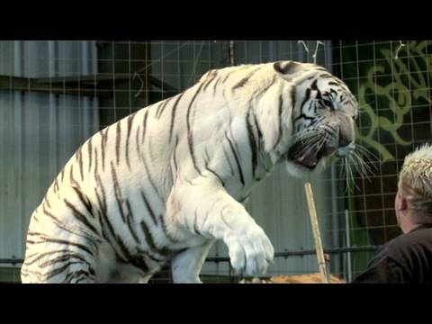 How To Tame Lions And Tigers