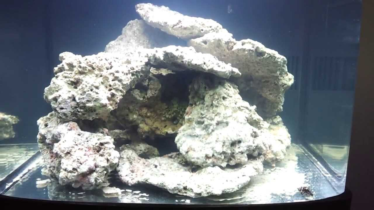 Biocube 29 Video Blog: Day 1 - my AquaScape and Curing the ...