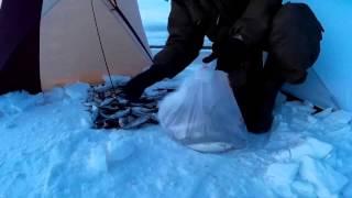 Ловля рипуса зимой. Увильды .Досчитай до ста