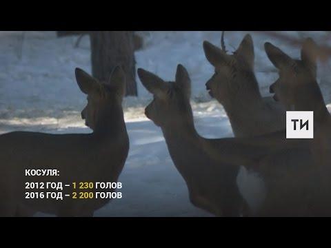В Татарстане растет поголовье диких животных