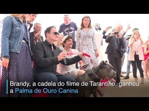 afpbr: Palma Canina em Cannes