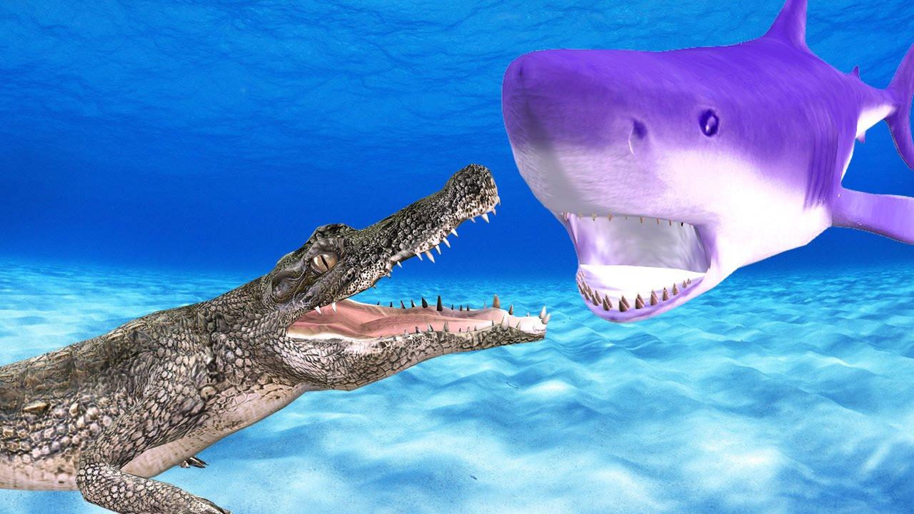 Shark & Crocodile Finger Family Children Rhymes | Animals Cartoons For Finger Family Nursery Rhymes