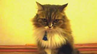 Superstar Cat