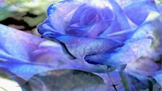 слайд шоу  Голубая Роза  - Непокидай....mpg