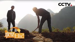 《攻坚日记》 20200511 云山村变迁记(3)|CCTV农业