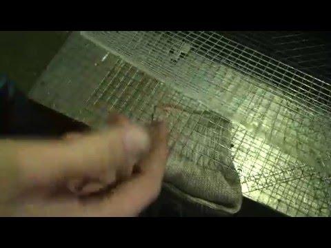 Некачественная сварная сетка от компании Корда (ООО ТД КОРДА)