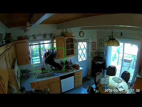 Bear breaks into Tahoe home
