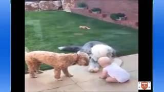 [Funny] Chết cười với động vật phần 1