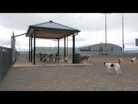 Halifax Mainland Common dog park (April 17, 2017)
