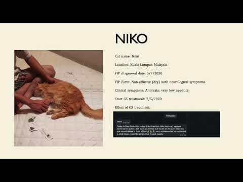 Basmi FIP Treatment Success Stories 2020, Part I