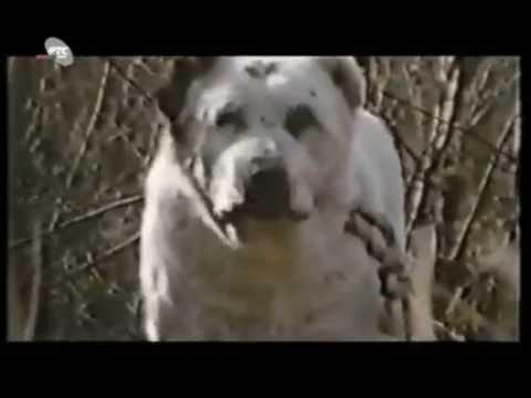 Dog vs Jaguar