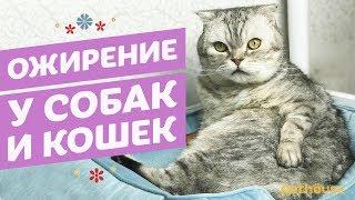 Причины ожирения кошек и собак. Как бороться с лишним весом у животных.