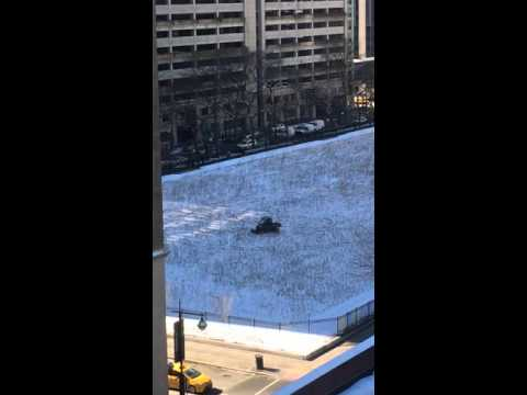 Coyote Chase in Streeterville