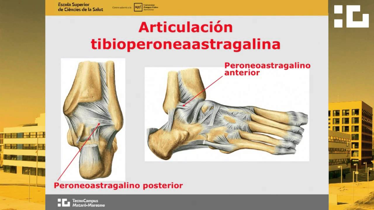 Estudio articular pierna y pie - YouTube