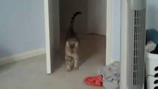 Смешные коты и кошки  Прикольные видео #2   2016