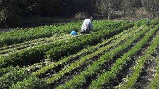 Коронавирус и Азербайджан. Вырос спрос на зелень