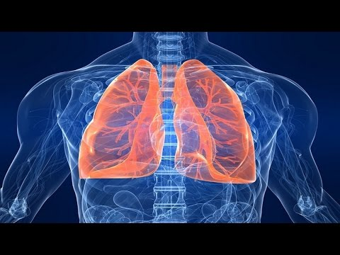 Scientists have discovered: that the lungs produce more than half of the platelets in the blood.
