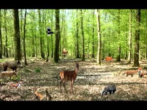 """Turbo Les animaux de """"La Forêt"""" - Chanson éducative pour enfants - Learn  HW37"""