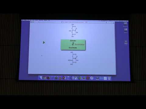 Lecture #30 Ahern's BB 451 - Citric Acid Cycle II