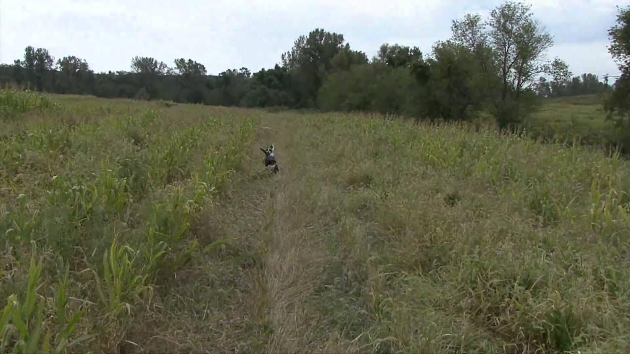 Safari iowa hunting farms part 2 youtube for Iowa out of state fishing license