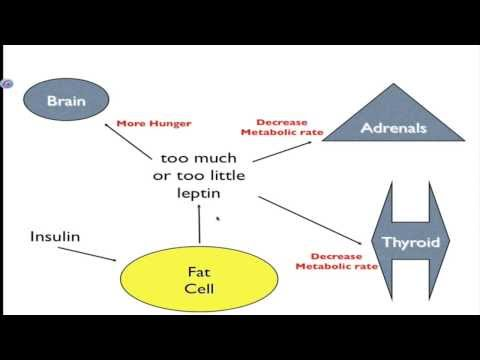 How to lose last bit of belly fat picture 3