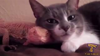 Top Funny Cats 2017 - try not to laugh😂😂😂😂😂😂😂😂