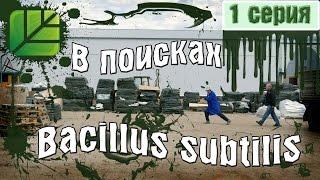 """Сериал """"В поисках Bacillus subtilis"""". 1 серия. """"Иностранный ученый"""" │ Башинком"""
