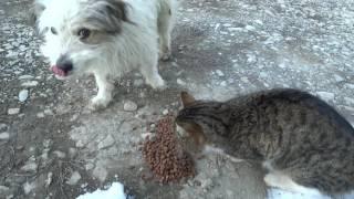 Кормлю бездомного пса и кота!